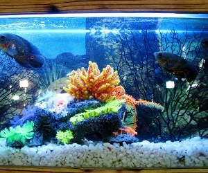Aquarium bei Aqua Design