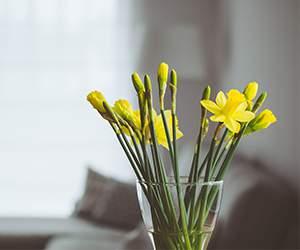 Strauß bei Blumenfee