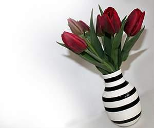 Tulpen bei Blumenfee