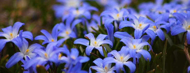 Blumen bei Baldur-garten