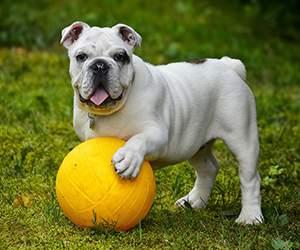 Zubehör für Hunde bei Zooroyal