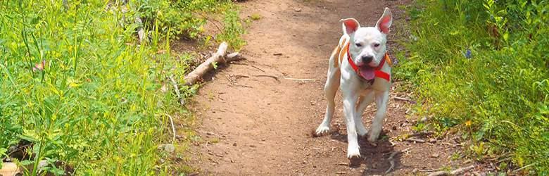 Zubehör für Hunde bei Zooplus