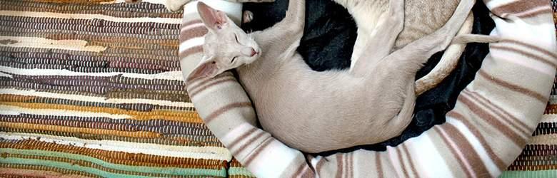 Katzenzubehör bei futtermühle