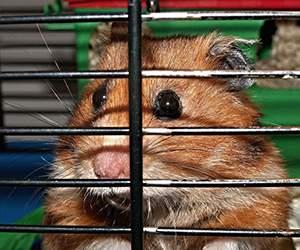 Hamsterkäfig bei Futterplatz