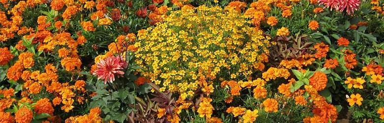 Blumen bei Gartentotal