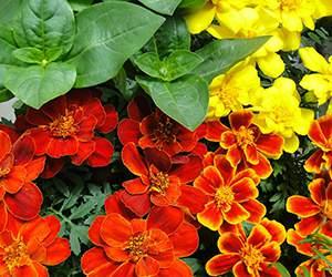 Pflanzen bei GartenXXL