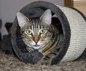 Katzenzubehör bei Katzenland