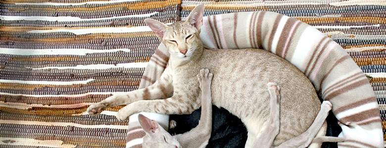 Katzenbett bei Lucas Tierwelt