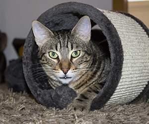 Katzenzubehör bei Pets Premium