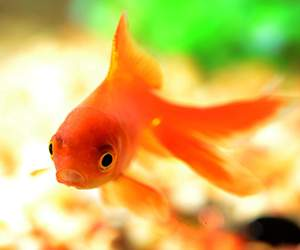 Zubehör für Aquarium bei Pets Premium